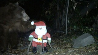 Caught On Camera: Bear Attacks Santa - Video