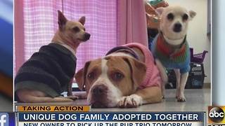 Yay! Homeless dog trio adopted together! - Video