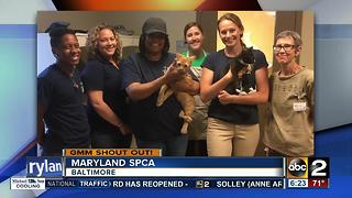 Maryland SPCA gives a Good Morning Maryland shoutout - Video