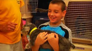 42 Collier County Dogs Adopted - Video