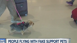 People flying with fake support pets - Video