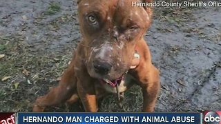 Brooksville man charged with animal cruelty