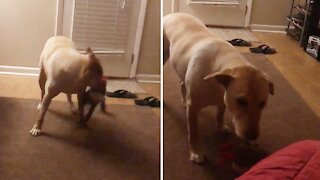 Doggy stops playing the moment his owner starts filming