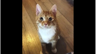 Playful Cat Replaces Lazy Dog In This Game Of Fetch