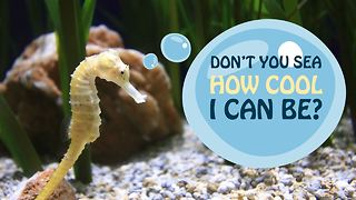 3 fun facts you didn't know about seahorses! - Video