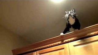 Ninja Cat Takes on Crane Fly - Video