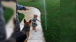 German Shepherd Loves Playing With Sprinklers - Video