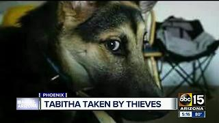 Phoenix man searching for dog stolen outside of grocery store - Video