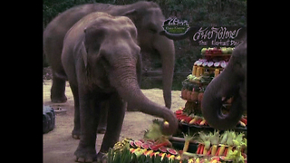Big Elephant Buffet - Video