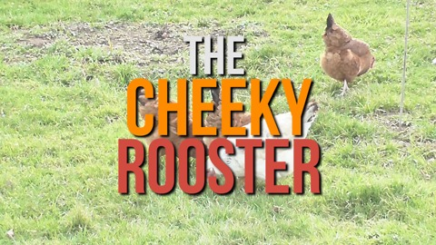 Joke: The Cheeky Rooster