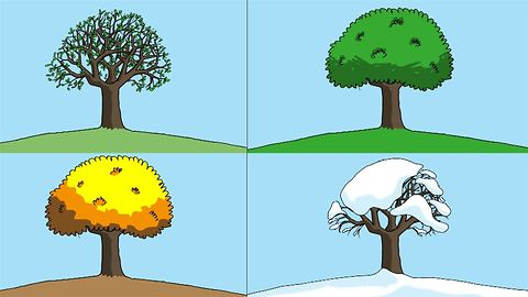 Where do seasons come from?