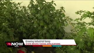 Wisconsin taking applications to grow industrial hemp - Video