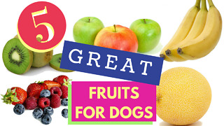 5 Great Fruits for Dogs! - Video