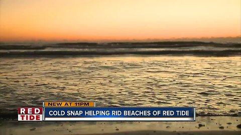 Cold snaps play small role in combating red tide, scientists say