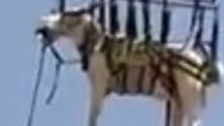 Distressed Horse Airlifted to Safety in Shadow Hills - Video