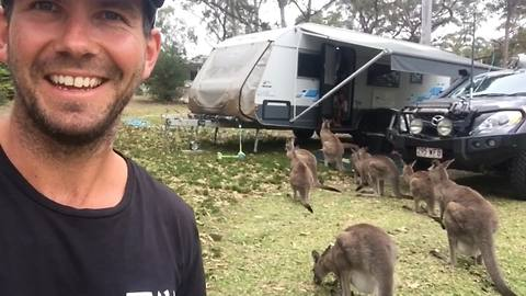 The word is out: Kangaroos LOVE caravans!