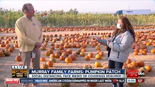 October 31st is the last day to enjoy the fall festivities at the Murray Family Farms