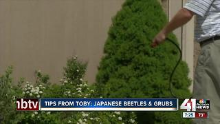 Tips from Toby: Japanese beetles & grubs - Video