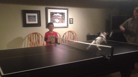 The Ping Pong Cat!