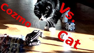 First Contact - Anki Cozmo ROBOT Meet My Cat  - Video
