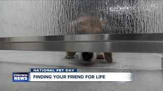 National pet day - Video