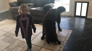 Girl goes to school, dog experiences separation crisis - Video