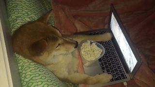 Dog makes popcorn, enjoys movie night