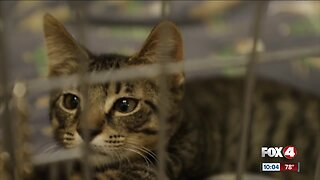 Animal shelter overcrowded with kittens
