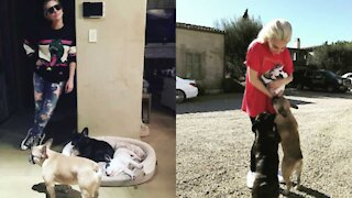 Lady Gaga's Dogs Were Stolen And Her Dog Walker Shot in Los Angeles