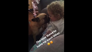 Frenchie and little girl share special moment