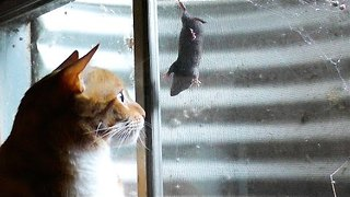 """It's a cat and """"mouse"""" game  - Video"""
