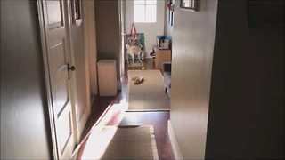Distracted Dog Daydreams Before Returning With Ball - Video