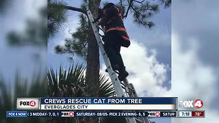 Fire crews rescue cat from tree - Video