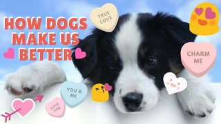 How Dogs Make Us Better - Video
