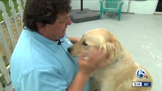 Therapy Dogs Coming To The Rescue In Vegas - Video