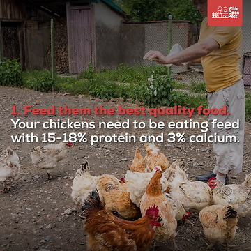 Should You Free Range Your Backyard Chickens?