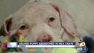 Abused puppy abandoned in milk crate