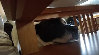 Determined dog can't quite reach popcorn - Video