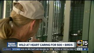 How to help wildlife in summer heat - Video