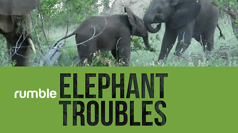 Compilation of determined elephants shows why they're such amazing creatures!
