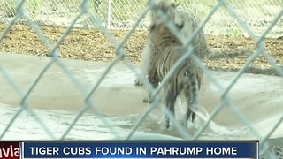 Exotic animals seized from Pahrump home, second time this month - Video