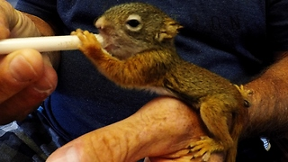Orphaned squirrels travel hundreds of miles before being rescued - Video