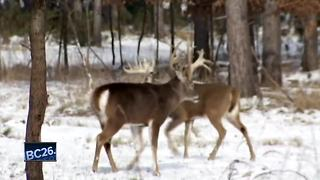 DNR asking hunters to help track CWD - Video