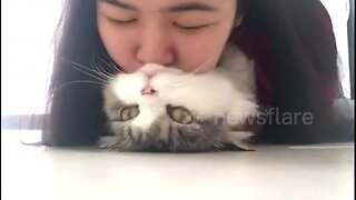 'Who's a pretty cat?' Kitty loves getting smooches from his owner