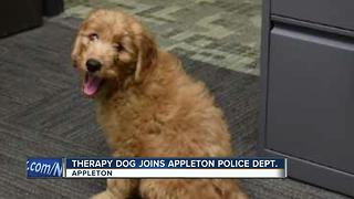 New 'volunteer' joins Appleton Police to become therapy dog - Video