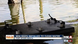 Mini reefs installed to clean water