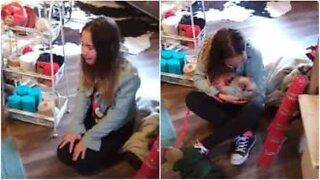 Little girl is surprised with a mini pig as her Christmas present