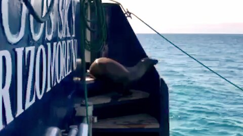 Adorable baby sea lion makes himself at home on tour boat
