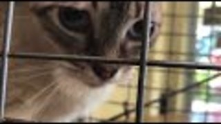Extreme animal rescue: Hoarder dies leaving 47 cats behind