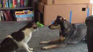 Cat And Dog Twirl In An Epic Fight-Or-Flight Battle - Video